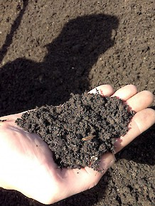 Local Blend 50/50 Soil