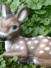 #428-Resting Fawn