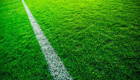 Sod Grass Sports Turf Non Netted Blueridge Bee Green