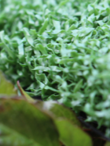 Synthetic Turf TPT60E
